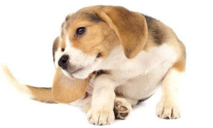 Hypoallergenic Dog Food: 3 Ways it Helps Your Dog's Food Allergies